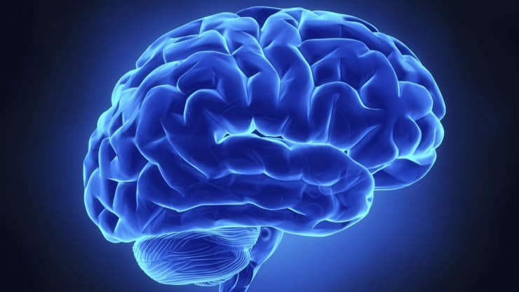 What Do We Really Know About the Aging Brain