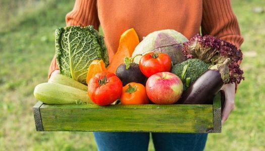 Fun Hobbies for Women Over 50: Organic Gardening