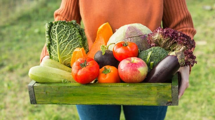 Hobbies for Older Women - Organic Gardening for Beginners
