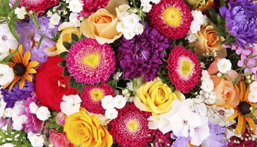 Daisies, Roses or Tulips? What Does Your Favorite Flower Say About You?