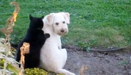 Cat Giving Dog Massage Takes Cuteness to a New Level