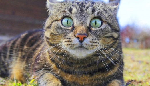 Think You're Focused? Wait Until You See This Amazing Cat