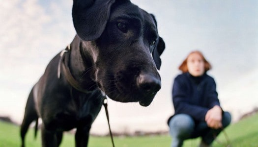 Volunteering with Guide Dogs: Give Back and Make New Friends