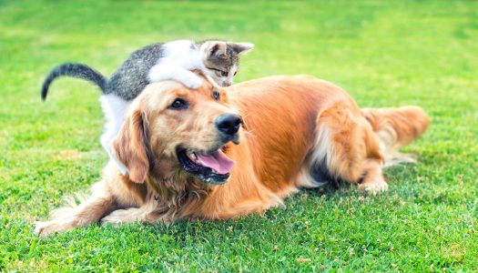 Cats vs. Dogs – What's the Best Pet for Seniors?