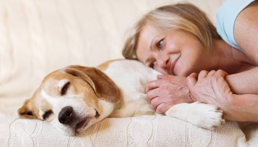Do Pets Bring Happiness After 60? Do You Have One?
