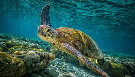 How to Experience the Largest Coral Reef in the World