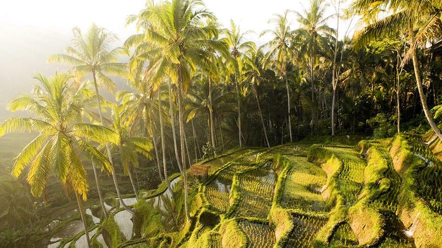 Traveling to Bali -