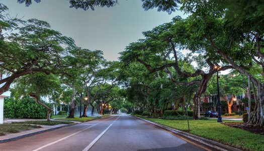 A Million Reasons to See the Trees with New Eyes While in Naples, Florida