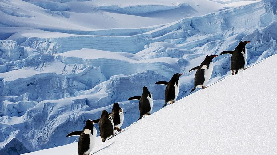 Journey to Antarctica