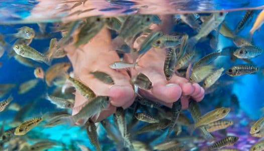 "Think Twice about Trying a ""Fish Pedicure"" on Your Next Mid-Life Vacation"