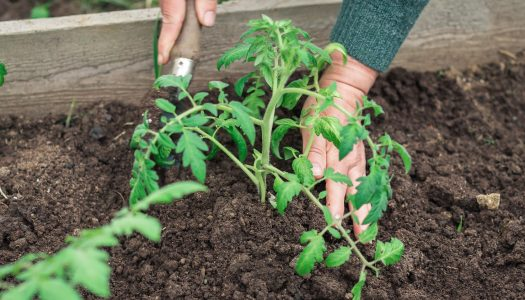 Gardening and Summer Food  – What's in It for You?